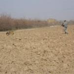 Handler Jones & MWD Joice checking a field