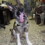 MWD Andor letting us know the socks fit