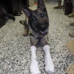 MWD Andor trying on socks