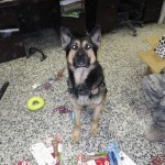 MWD Posing with toys & treats