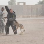 SSgt Mastin & MWD FFella doing bite training at the 332 ESFG K9 at JBB Iraq 5-2009